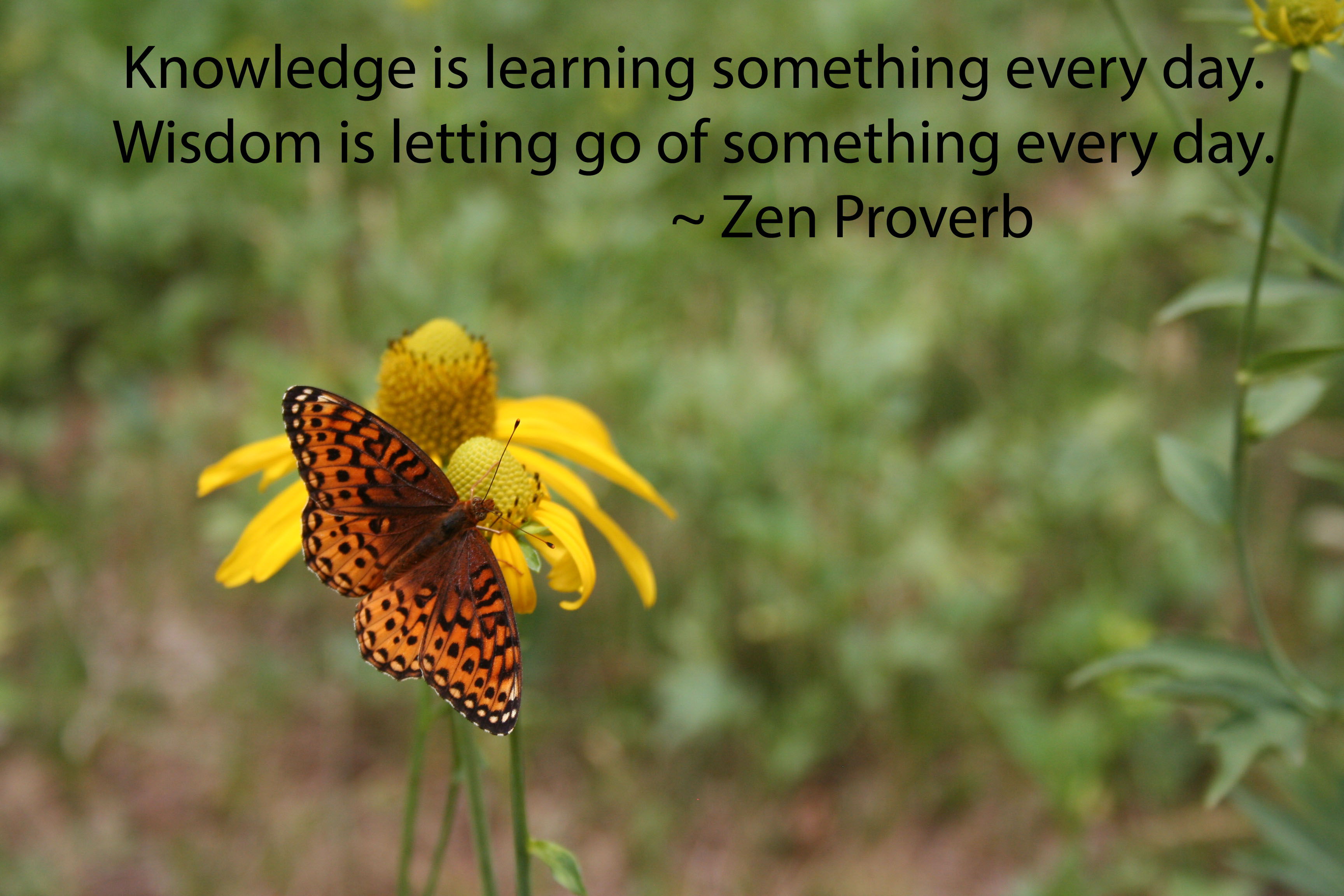 """Knowledge is learning something every day. Wisdom is letting go of something every day."" - Zen proverb written on photo of a butterfly on a flower."