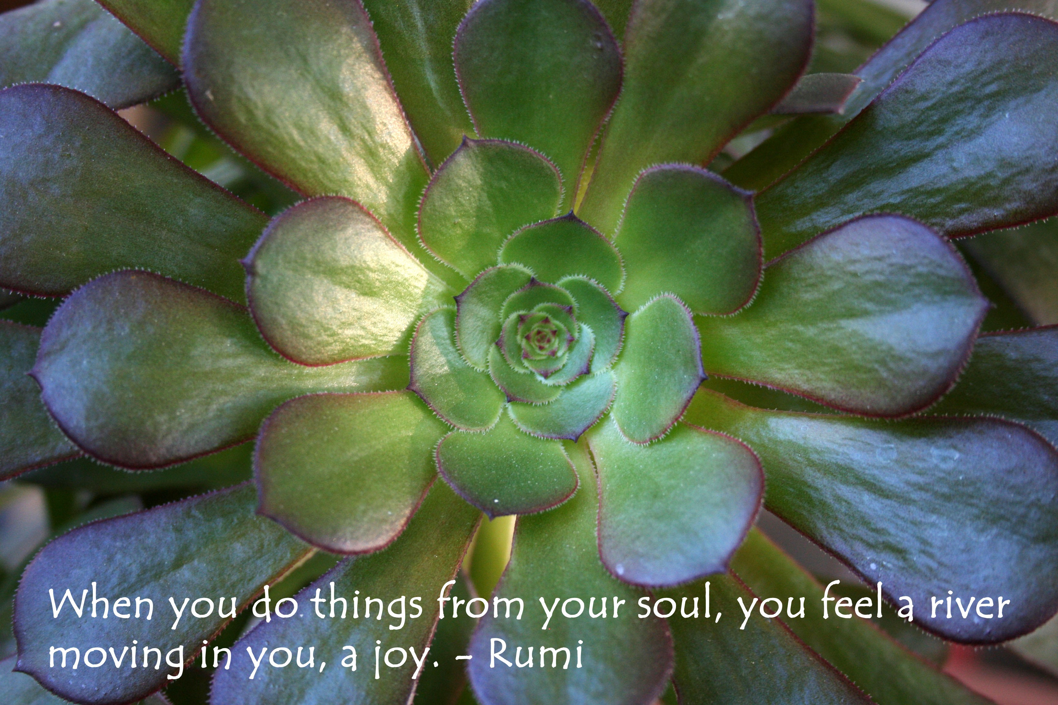 """When you do things from your soul, you feel a river moving in you, a joy."" - Rumi quote over a photo of a succulent."