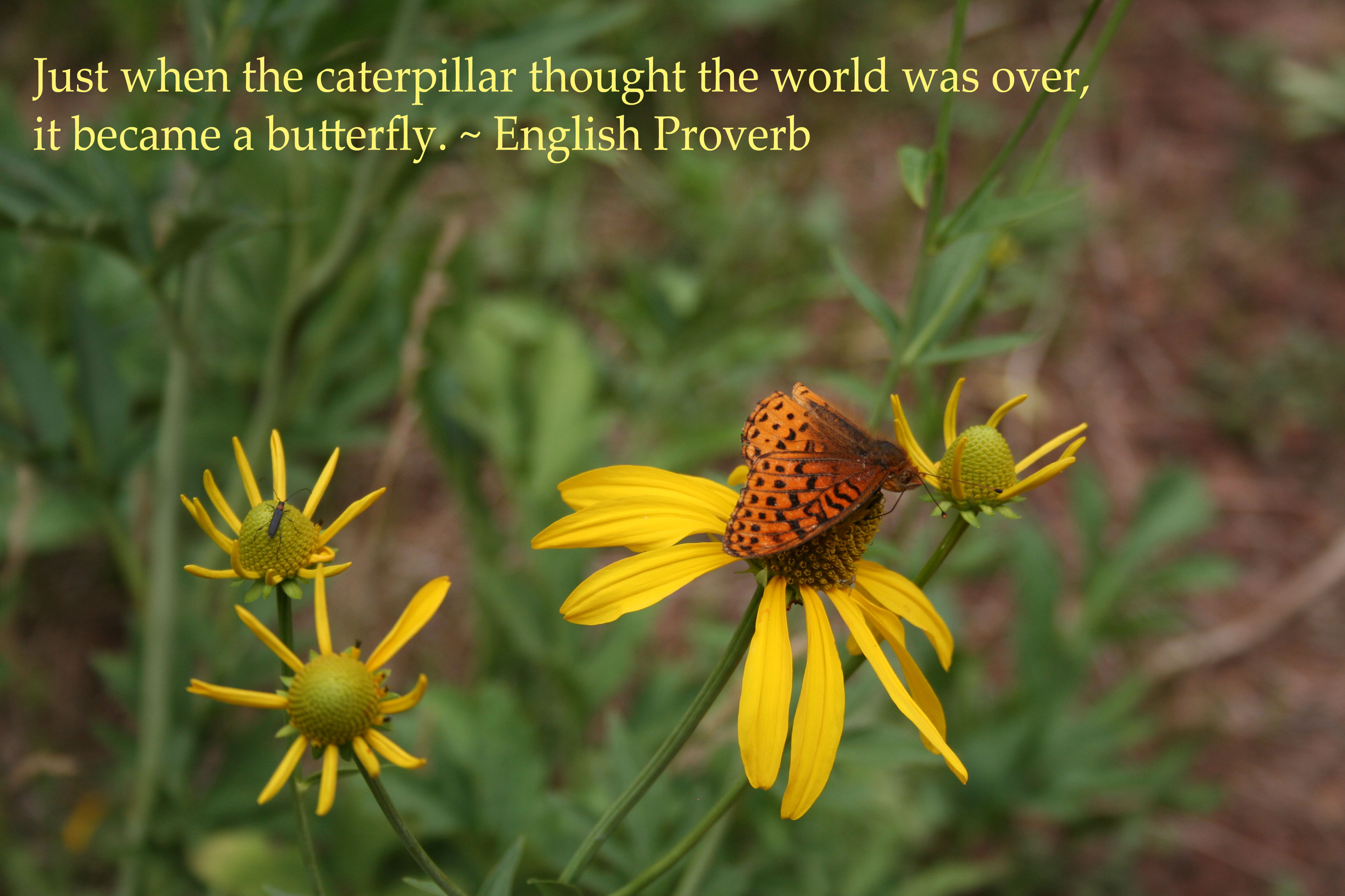 """""""Just when the caterpillar thought the world was over, it became a butterfly."""" - English proverb written on a photo of a butterfly on a flower."""