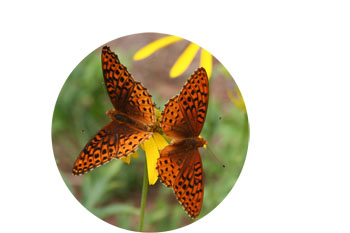 2-butterflies-circle-image